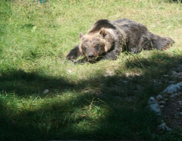Parco Monti Simbruini, si cercano tracce dell'orso avvistato aFilettino