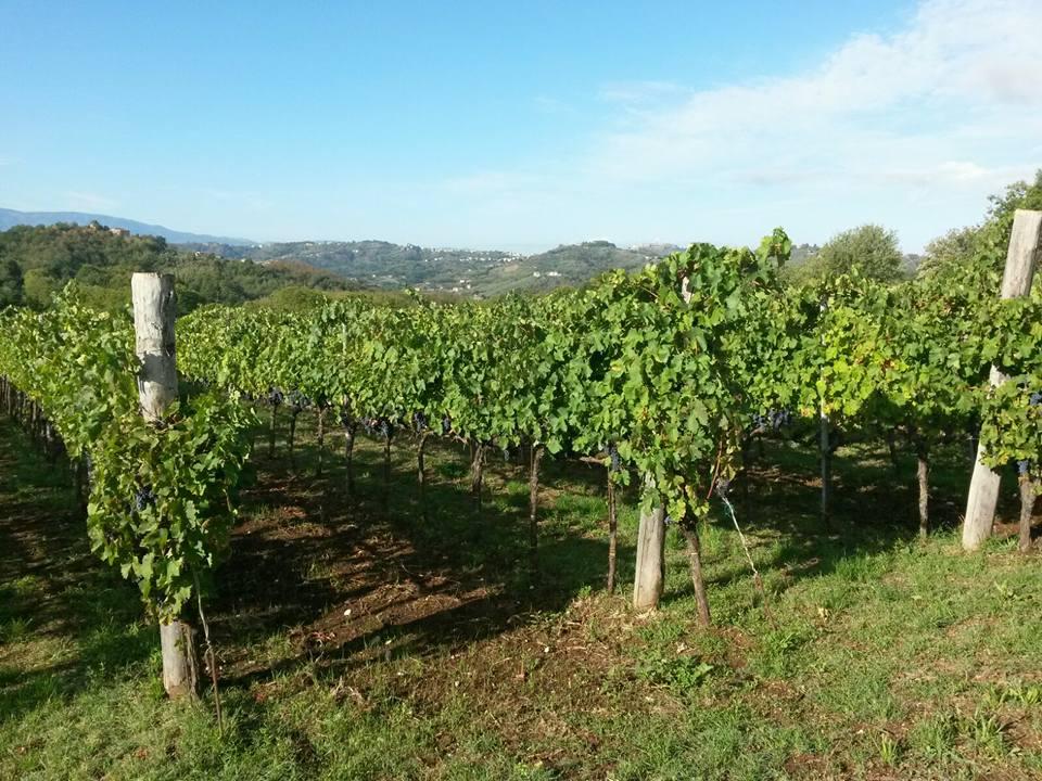 Sul vino Cesanese, prima etichetta Docg del Lazio, un seminario presso l'Alberghiero diPaliano